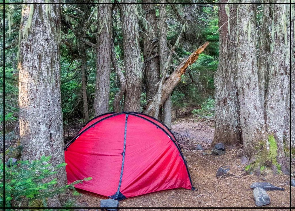 campsite in forest